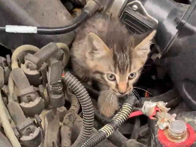 Video : बारिश में भीग रही थी बिल्ली, कार के इंजन को ही बना लिया अपना घर
