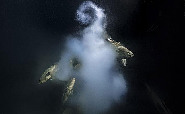 Explosive Underwater Scene Wins Wildlife Photographer Of The Year 2021