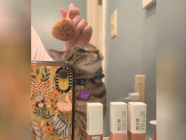 Video : बिल्ली का मेकअप रूटीन देख हैरान रह जाएंगे आप