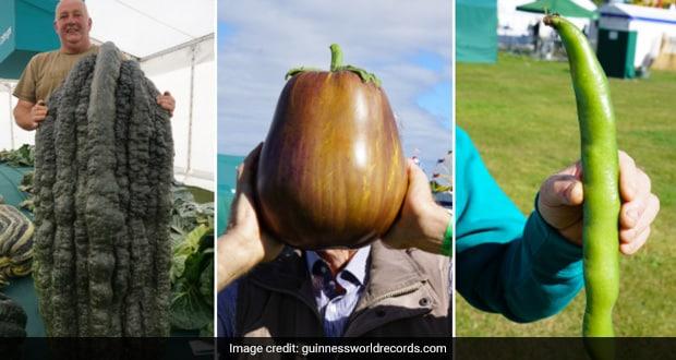 Egg Plant, Leek And More: 4 Vegetables That Broke Records At Giant Vegetable Championship