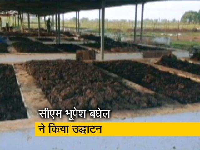 Videos : छत्तीसगढ़ सरकार गाय के गोबर से बिजली उत्पादन करेगी