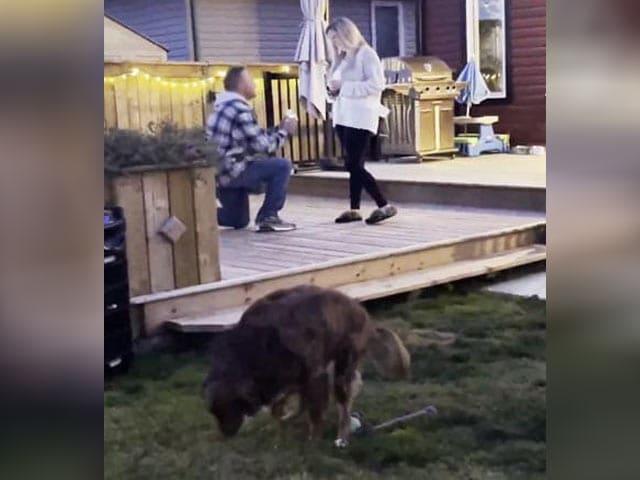 Video : शादी के लिए लड़का कर रहा था प्रपोज़, तभी कुत्ते के लिए किया ऐसा कि...