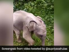 Watch: Baby Elephant Reunited With Mother After Rescue In Tamil Nadu