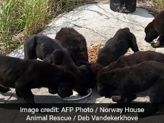 Puppies Stranded On Uninhabited Island Rescued, Up For Adoption Soon