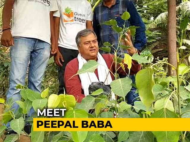 Video : Meet Peepal Baba, The Man Who Has Planted Over 20 Million Trees