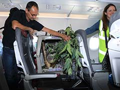VIP Koala Gets Own Seat On Flight To His New Home