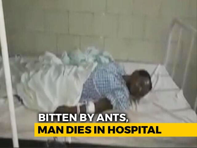 Video : For 2 Days, Ants Fed On Wounds Of Man Who Died In Chhattisgarh Hospital