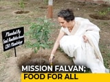 Video : How Radhika Anand's Mission Fal-Van Is Increasing India's Green Cover