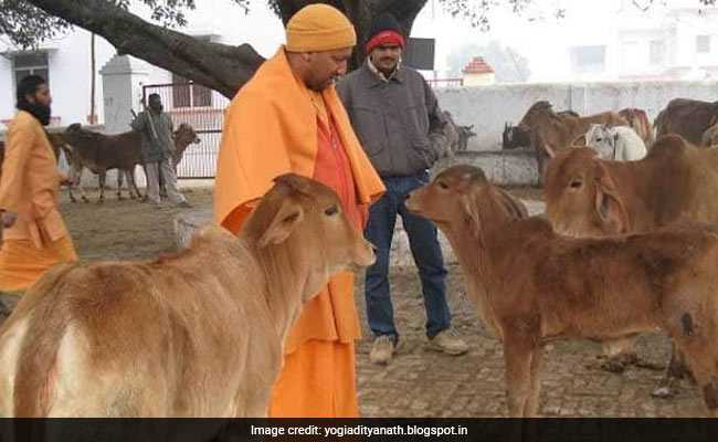 A Name Change For Cattle Shelters In UP After Villagers Round Up Animals