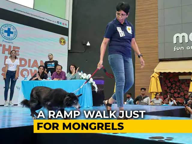 Video : Mongrels Walk The Ramp In Chennai, Over 100 Dogs Compete For 28 Titles