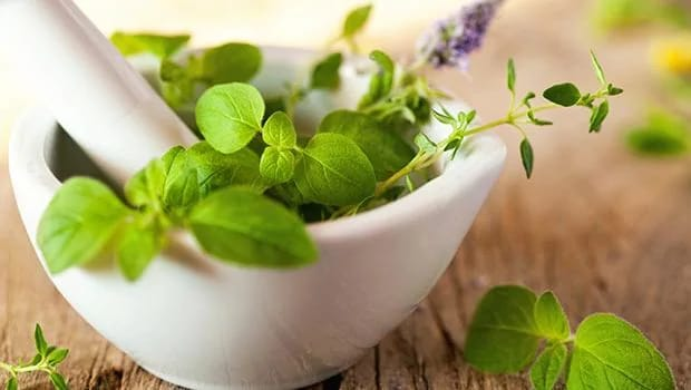 Struggling With Hair Fall? Here Are 5 Amazing Herbs Which Might Help And Contribute To Hair Growth
