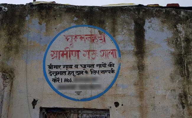 दिल्ली की एक गोशाला में लापरवाही की वजह से अब तक 48 गायों की मौत, जांच शुरू