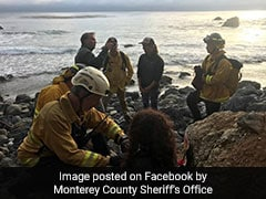 """Woman Falls Off A Cliff, Survives 7 Days """"Trapped"""" On A Secluded Beach"""