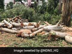 33 Trees Pruned, 5 Cut Without Permission In NCERT Delhi Campus