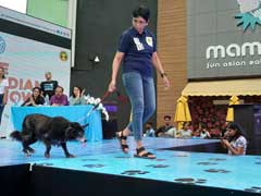 Mongrels Walk The Ramp In Chennai, Over 100 Dogs Compete For 28 Titles