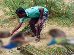 47 Peacocks Found Dead In Madurai, Poisoning Suspected