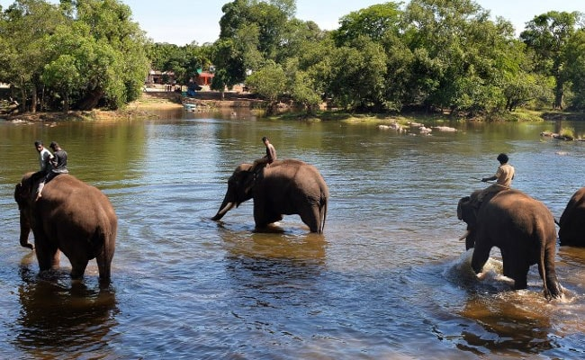 'Elephants, Like Us, Have Nowhere To Go': India's Human-Wildlife Conflict