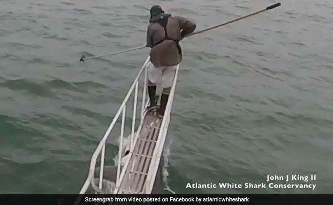 VIDEO: मछली पकड़ने के लिए खड़ा था शख्स, शार्क को दिखा पैर और उछलकर आ गई ऊपर