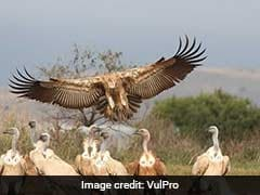Rare African Vulture, Brought To US To Save Species, Killed In Hailstorm