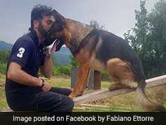 Dog Who Rescued Quake Survivors Found Dead. Owner Says He Was Poisoned
