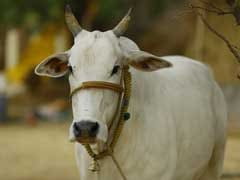 UP Minister's Proposal To Set Up Cow Safaris In State