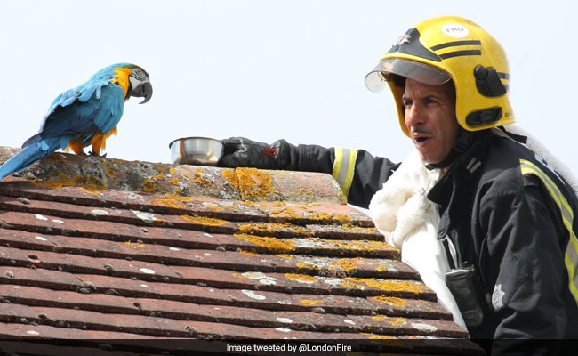 Foul-Mouthed Parrot Swears At Firefighter Trying To Rescue Her From London Roof