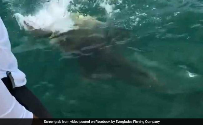 जब देखते ही देखते शार्क को निगल गई विशालकाय मछली, देखें VIDEO