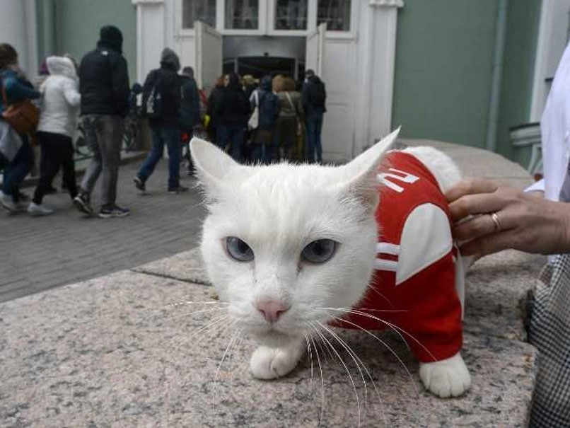 FIFA World Cup: Achilles The Cat Is Russia