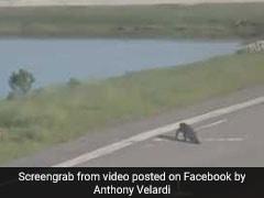 Alligator Strolls Across Runway, Delays Flight. Passenger Captures Video