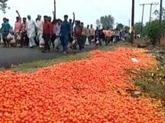 Farmers In UP's Amroha Dump Tomatoes On Streets After Prices Go South