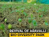 Video: Revival Of Aravalli Bio Diversity Park In Gurugram