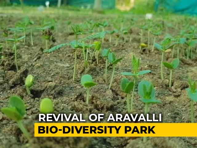 Video : Revival Of Aravalli Bio Diversity Park In Gurugram