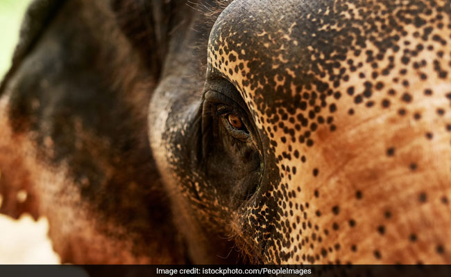 Elephant Dies After Being Hit By Train In Odisha's Keonjhar