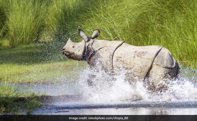 7 Most Popular Wildlife Destinations In Assam