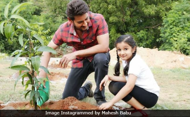 Mahesh Babus Daughter Sitara Is Happy To Assist Him In The Green