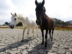 """""""No Grass For Livestock"""": Century-High Temperature Hits Europe's Farmers"""