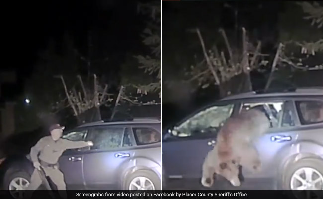 Watch: Cop Smashes Open Car Window To Free Bear Trapped Inside