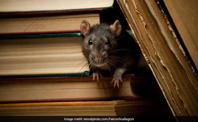Burglar Alarm Goes Off In UP Bank. Culprit - Rats