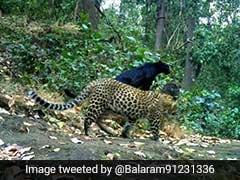 black-panther_odisha-_120x90_1526957324443.jpg