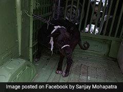 Burari Family's Dog Showing Signs Of Improvement: Activist