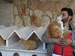 "In War-Torn Syria's Aleppo, ""Cat Man"" Starts Rare Animal Clinic"