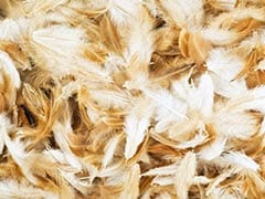 Truck Overturns On Highway, 18 Million Chicken Feathers Cover Road
