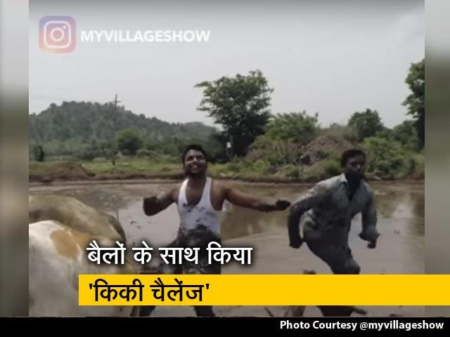 Videos : बैलों के साथ किया 'किकी चैलेंज', वीडियो हुआ वायरल