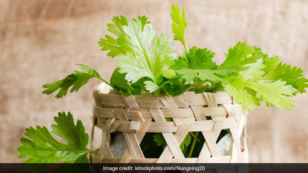 How To Store Fresh Coriander? 3 Expert Tips To Remember