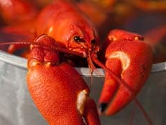 Crayfish Rips Off Claw To Escape Boiling Pot. Diner Films Shocking Moment
