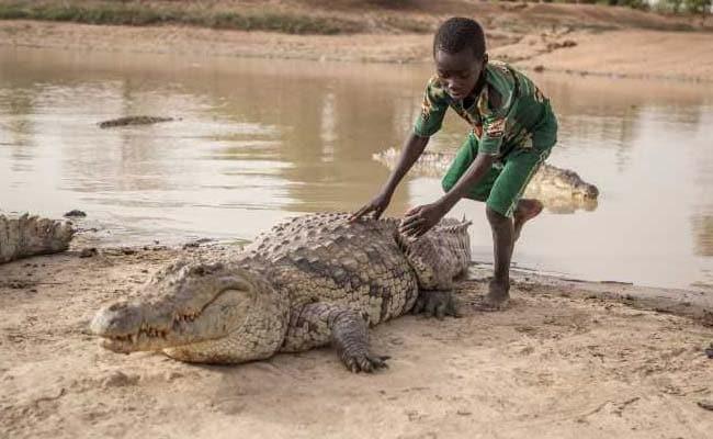 crocodile lovers bazoule burkina faso 3 afp