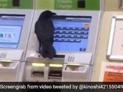 VIDEO: ट्रेन की टिकट खरीदने के लिए कौवे ने छीना महिला का क्रेडिट कार्ड