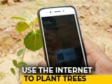 Video: This NGO Helps People Plant Trees Virtually