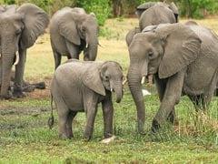3 Elephants Killed By Speeding Train In West Bengal