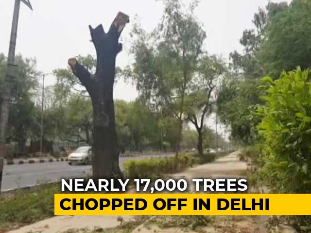 Video : 17,000 Trees To Be Felled In Delhi For Government Housing: Official